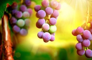 Uva: una musa per l'arte