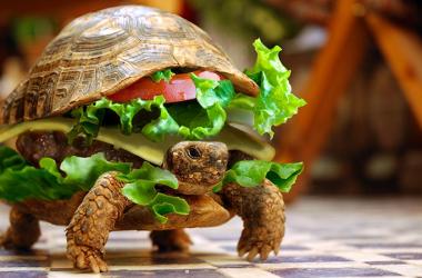 17 diete per dimagrire senza fretta