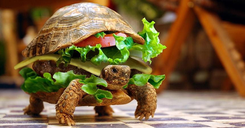 Diete Per Perdere Peso In Fretta : Diete per dimagrire senza fretta dietaonline