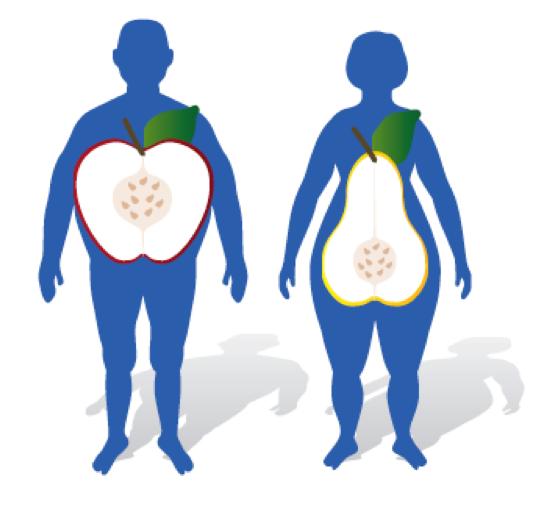 distribuzione-del-grasso-corporeo