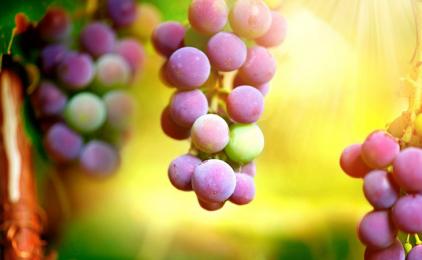 Uva: valori nutrizionali, proprietà e benefici