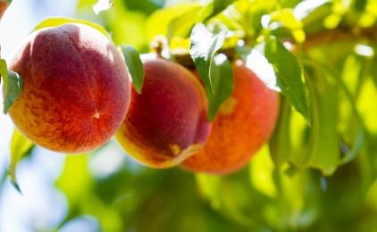 La frutta in tutte le sue forme: tipologie, benefici e svantaggi