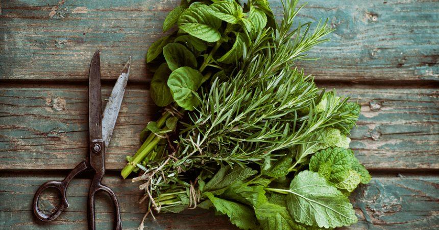 Erbe aromatiche e loro usi nella dieta alimentare