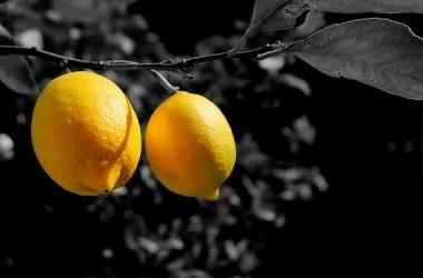Il limone: frutto ricco di fibre, e fonte d'ispirazione per artisti e poeti