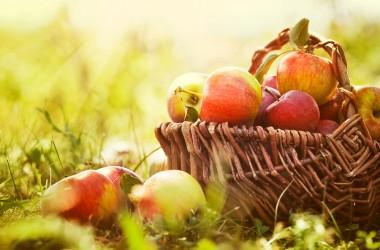 Il Trentino Alto Adige e le sue mele in cima all'Europa #BioCook