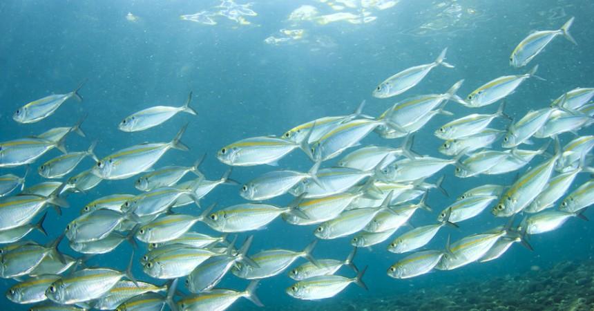 Omega 3? Non farti mai mancare il pesce azzurro!
