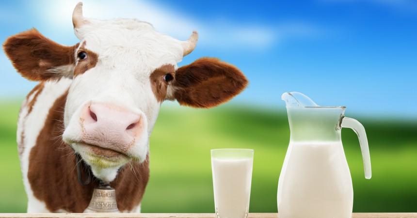 Il latte biologico