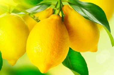 Il limone: proprietà e benefici