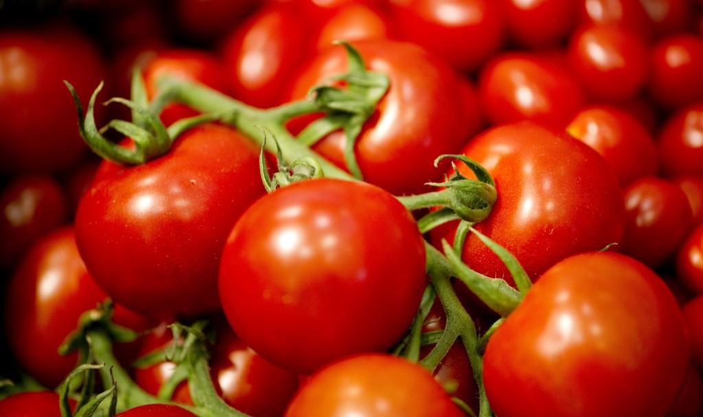 coltivare-pomodoro-in-vaso-1024x608