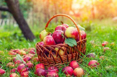 Alcune curiosità sulle mele: i frutti più destagionalizzati dell'anno